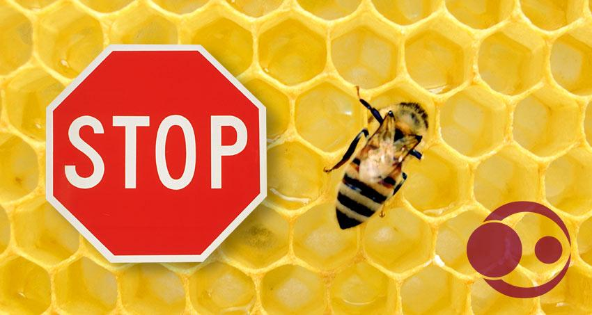 Kein Honig für Babys